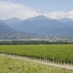 Winnice i góry Kaukazu, fot. Łukasz Gołębiewski
