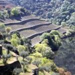 Quinta do Panascal-007