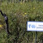 Quinta do Panascal-013