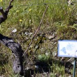 Quinta do Panascal-018